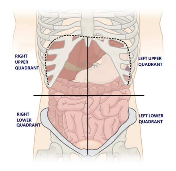 Liver Pain Where Is The Liver Location Anatomy Function