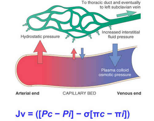 The picture shows normal hemodynamics at work in the blood vessels