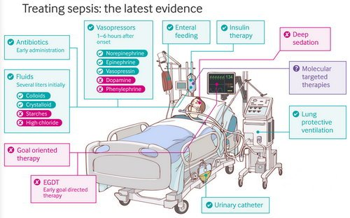 Treatment general outline in a case of sepsis image photo picture